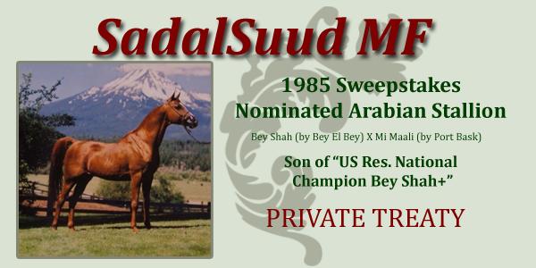 Sweepstakes Nominated Sire Sadal Suud MF