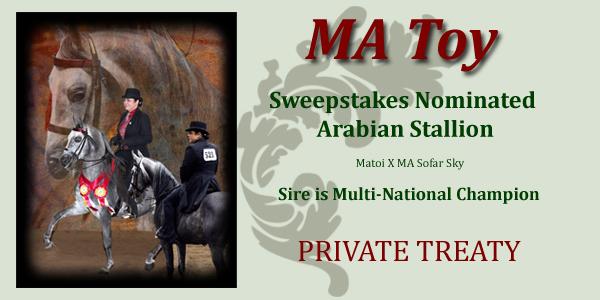 Private Treaty Multi National Champion Son